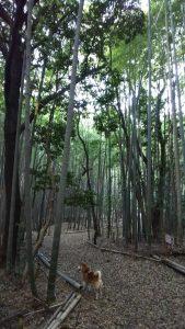 細根山 オアシスの森